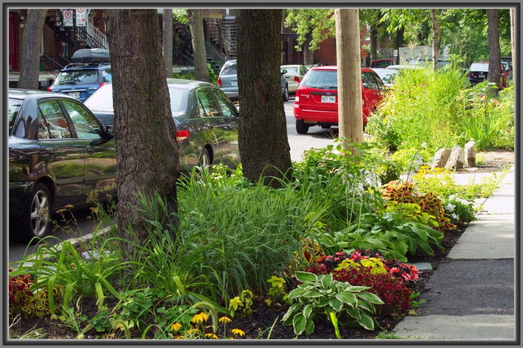 La préservation de la nature en ville avec Guerilla Gardening
